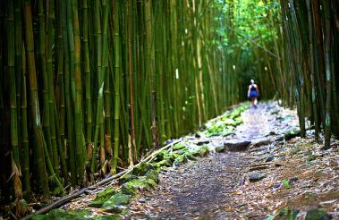 Bamboo Canopy - Seven Sacred Pools, Hana Maui