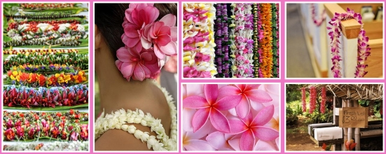 Got Lei'd?  Follow our Pinterest board for Lei and floral ideas!